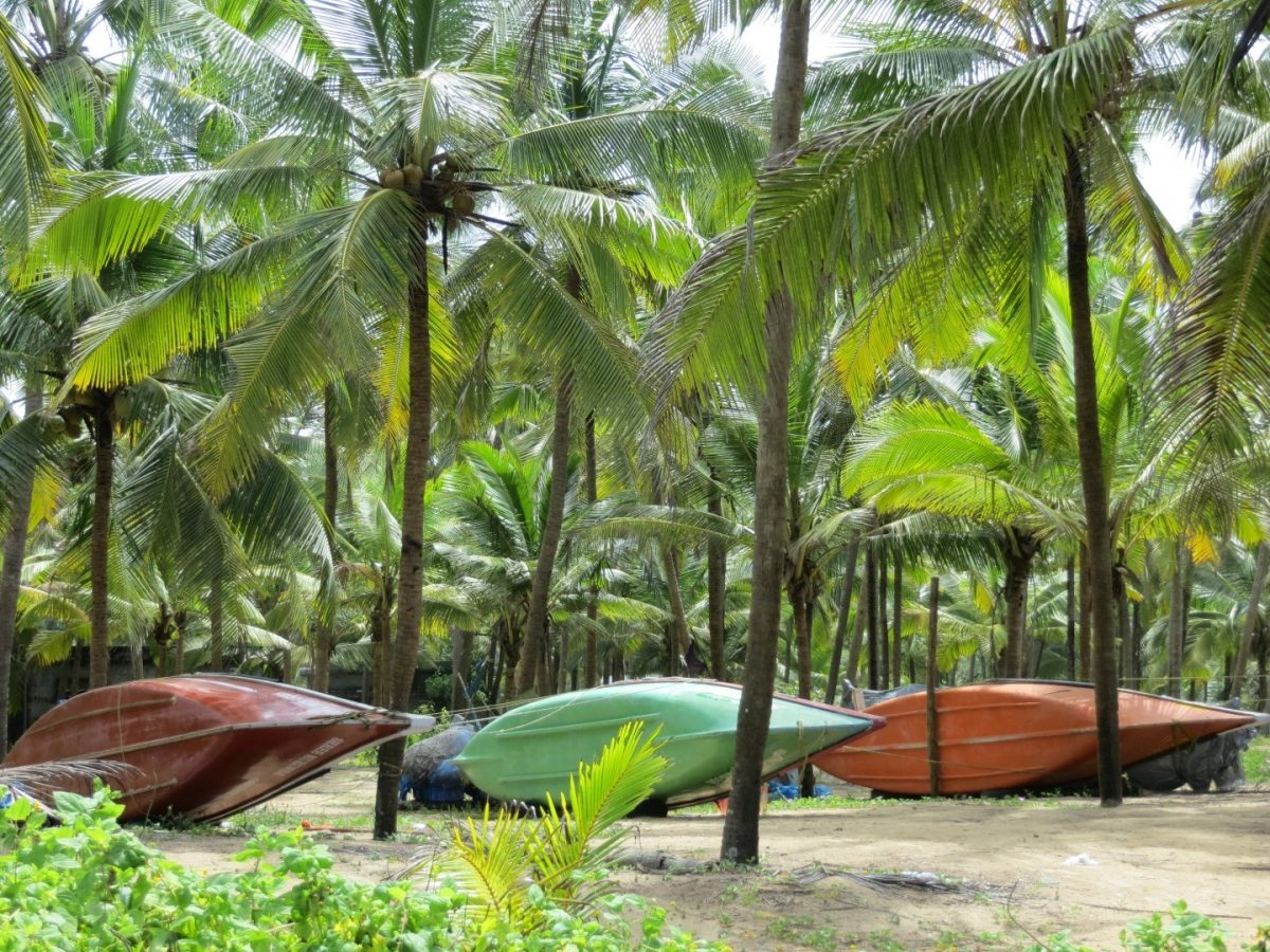 Malabar Backwaters