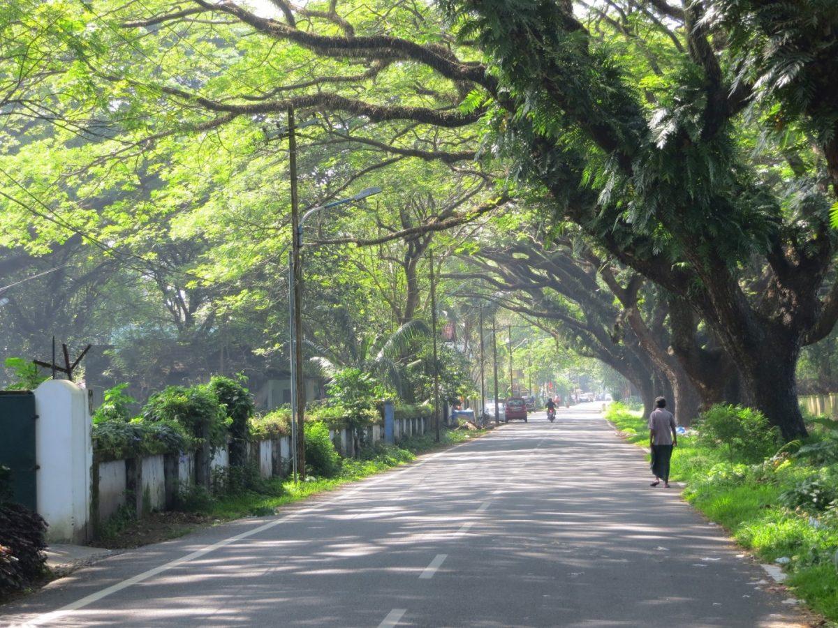 Rain Trees Fort Kochin